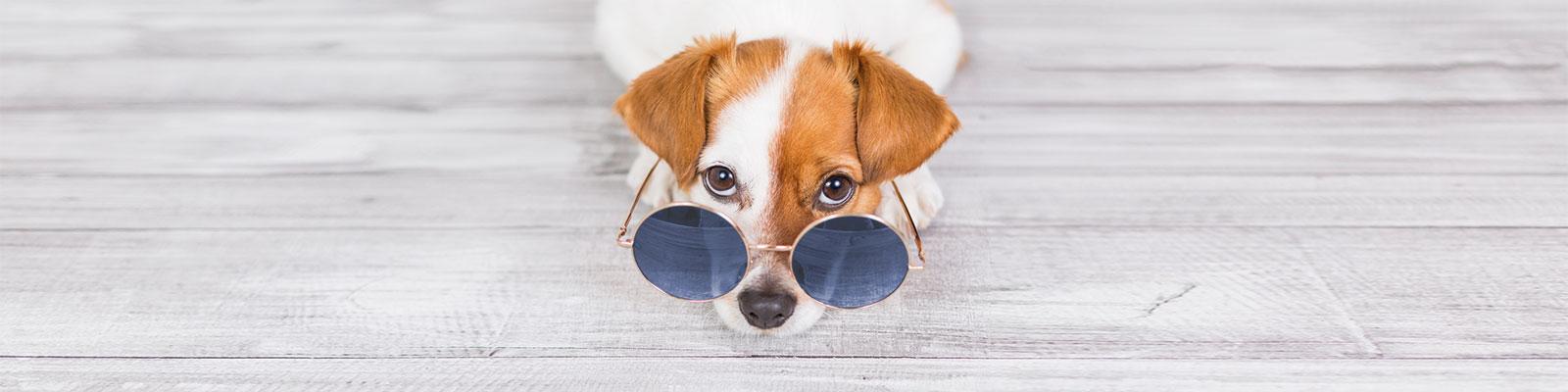 optik-gerigk-Entspiegelte Brillengläser